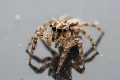 Macro ritratto del ragno Fotografia Stock Libera da Diritti
