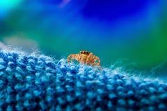 Macro ritratto del ragno Fotografie Stock