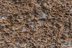 Macro roche Photo libre de droits