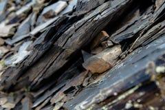 Macro Roche d'élément, texture de pierre Montagnes de Caucase Photos libres de droits