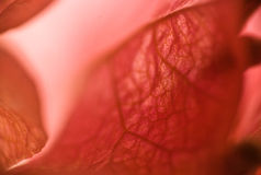 Macro roja de la flor fotos de archivo