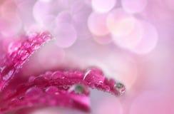 Macro rosada de la flor Fotos de archivo libres de regalías