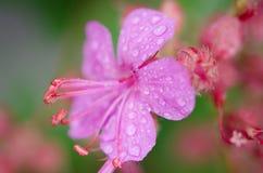 Macro rosada de la flor Fotografía de archivo