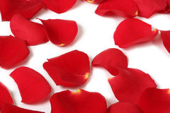 Macro rose petals. Close-up of red rose petals on white royalty free stock image
