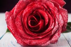 Macro rose Stock Photos