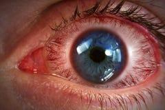 Macro rossa del bulbo oculare Immagini Stock Libere da Diritti