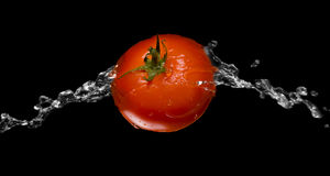 Macro rossa della spruzzata del pomodoro isolata sopra il nero Immagini Stock Libere da Diritti