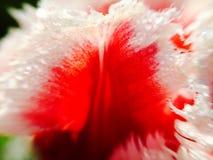 Macro rossetto Fotografia Stock