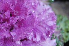 Macro roze installatie met waterdruppeltjes Stock Foto's
