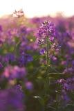 Macro roze wilde bloemen royalty-vrije stock foto