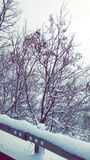 Snow trees Royalty Free Stock Photo