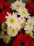 Macro sacada del escarlata, flor roja Imagenes de archivo