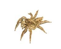 Macro sautant d'araignée photographie stock