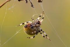 Macro schot van de bodemkant van een spin Stock Foto