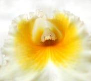 Macro Schot van een Orchidee in het Centrum royalty-vrije stock afbeelding