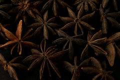 Macro scura del primo piano della foto della spezia del fiore dell'anice Immagini Stock