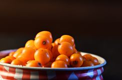 Macro sea buckthorn in red lid royalty free stock images