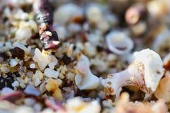 Macro Sea Shells Stock Photo