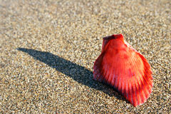 Macro Seashell image stock