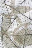 Macro secada de las hojas - natural Imagenes de archivo