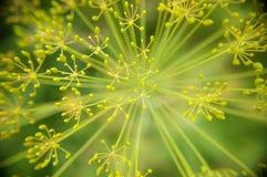 Macro seeds Stock Image