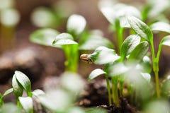 Macro seeds growing Stock Photos