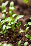 Macro seeds growing Stock Images