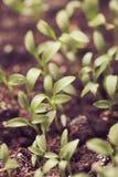 Macro seeds growing Stock Photography