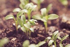 Macro seeds growing Stock Photo