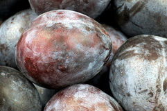 Macro of several ripe plums Royalty Free Stock Images