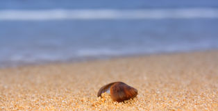Macro shell Stock Image
