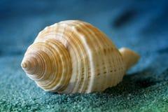 Macro shell Stock Photo