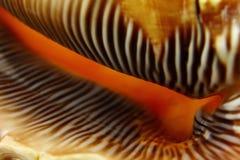 Macro shells stock afbeelding