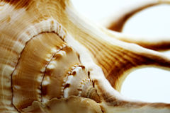Macro shells Stock Photos
