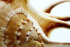 Macro shells stock foto's