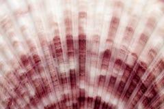 Macro shells stock images