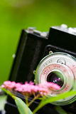 Macro shoot. A photo of an old Cmena film camera taking closeup shots of a flower in front of it Royalty Free Stock Image