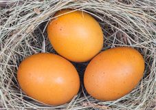 Macro shoot of brown eggs Royalty Free Stock Photos