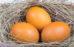 Macro shoot of brown eggs Stock Image