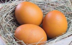 Macro shoot of brown eggs Stock Images