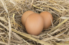 Macro shoot of brown eggs at hay nest royalty free stock image