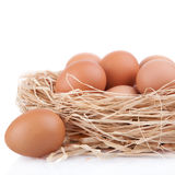 Macro shoot of brown eggs at hay nest in chicken farm, isolated Stock Photo