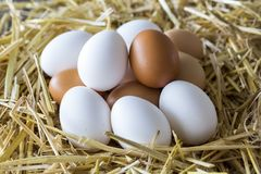 Macro shoot of brown / white  eggs at hay nest in chicken farm.  royalty free stock photos