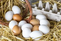 Macro shoot of brown / white  eggs at hay nest in chicken farm.  stock image