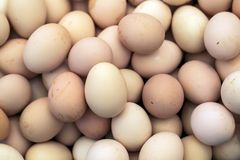 Macro shoot of brown / white  eggs at hay nest in chicken farm stock image