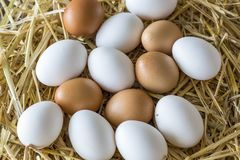 Macro shoot of brown / white  eggs at hay nest in chicken farm.  royalty free stock images