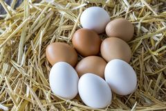 Macro shoot of brown / white  eggs at hay nest in chicken farm.  stock photo