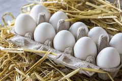 Macro shoot of brown / white  eggs at hay nest in chicken farm stock photo