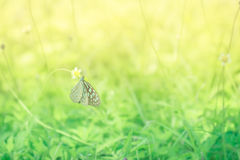 Macro shoot of butterfly on yellow flower with blured background Royalty Free Stock Photography