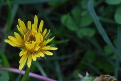 Macro shoot of flowers growing in my garden, its closeup shot stock images